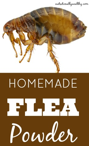 Homemade Flea Powder-- All Natural