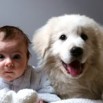A Baby Photographer Did A Cliché Newborn Photo Shoot Starring A Dog And It's The Cutest
