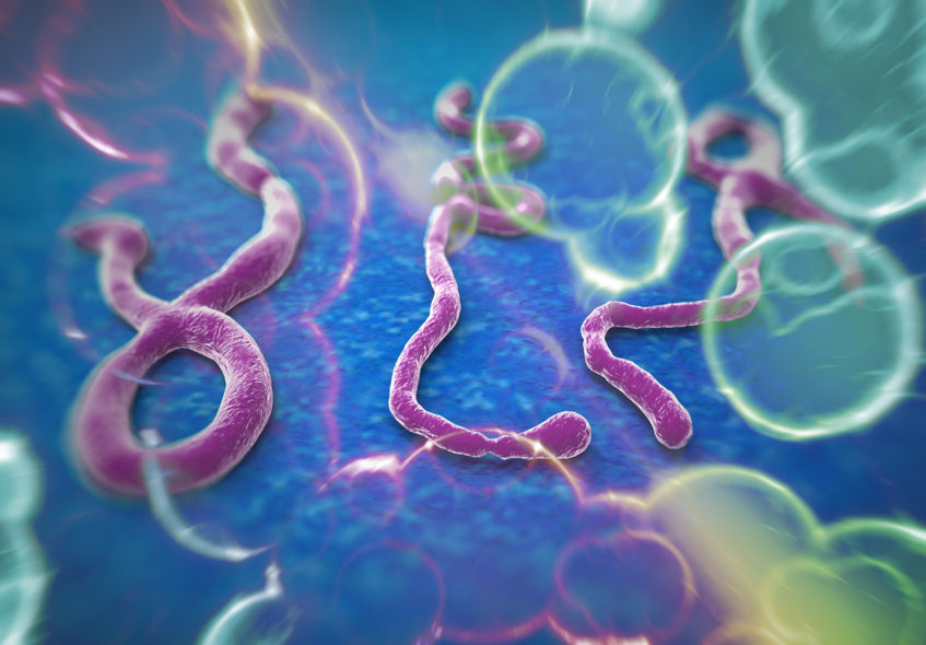 Ebola, A Nurse's Perspective