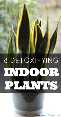 8 Detoxifying Indoor Plants that act like Air Filters (3 of them are very hard to kill!)